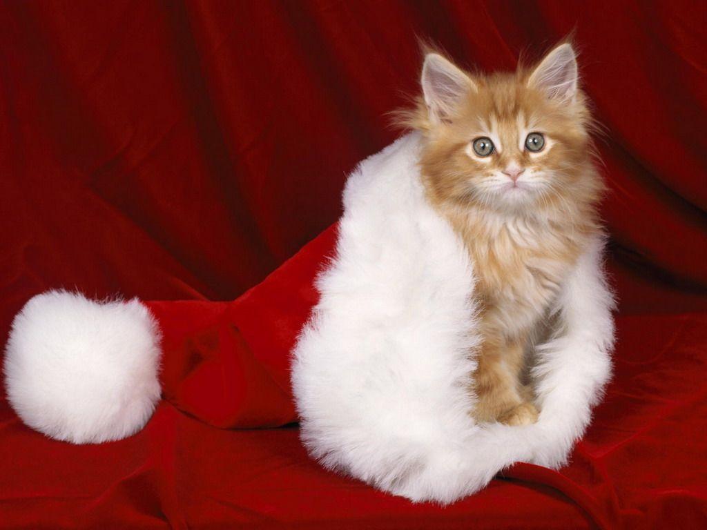кот, новый год, обом на рабочий стол