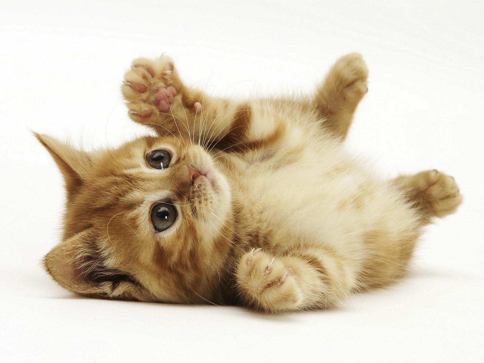 Маленький котенок, обои для рабочего стола, красивое фото