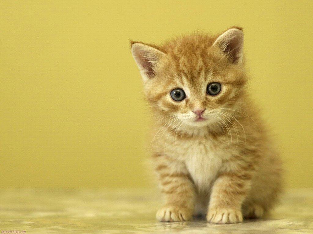 Рыжий котенок, фото , обои на рабочий стол