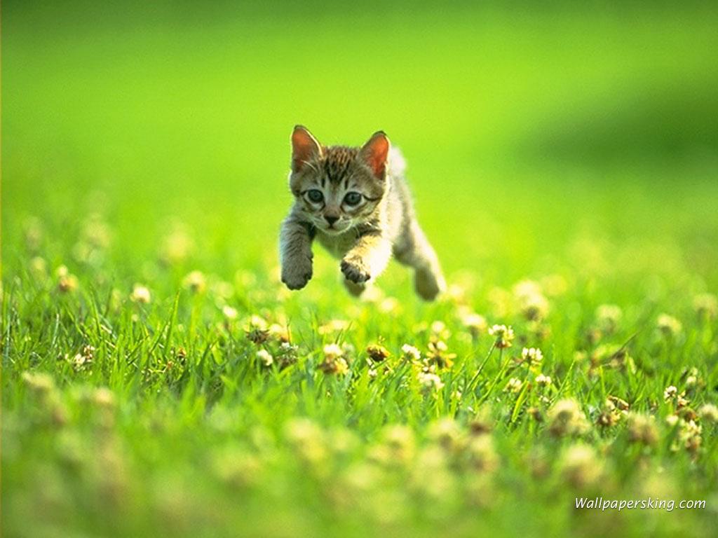 Котенок бежит по траве, кошки, фото, обои на рабочий стол