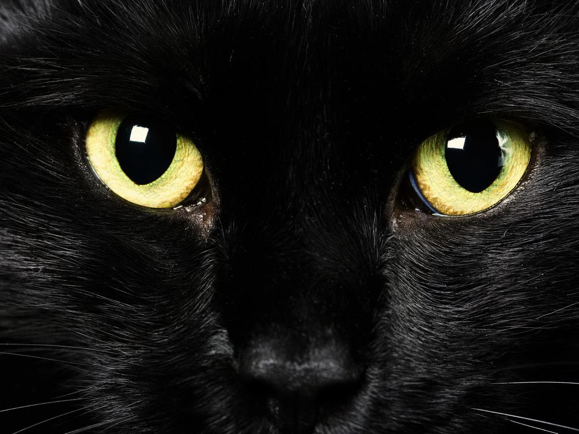 Черная кошка с желтыми глазами, фото, обои для рабочего стола