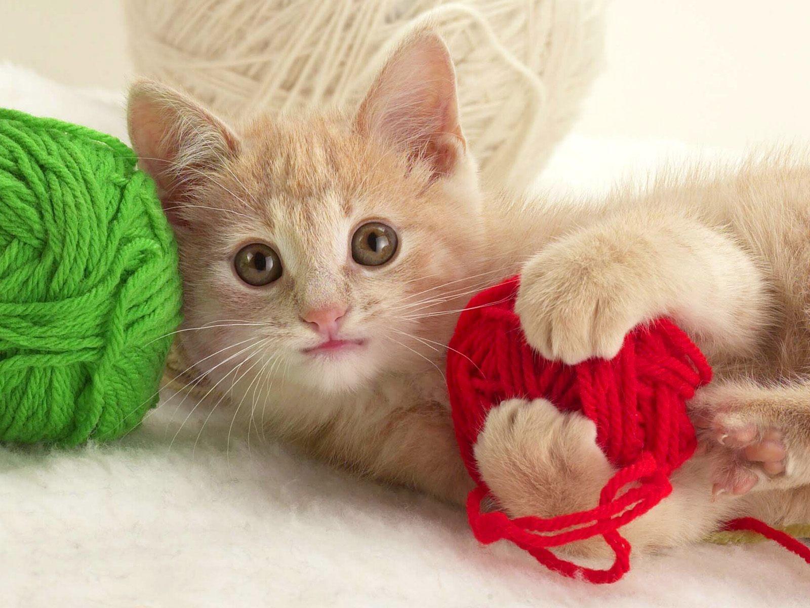 котенок и клубок ниток, играется, кошки, фото