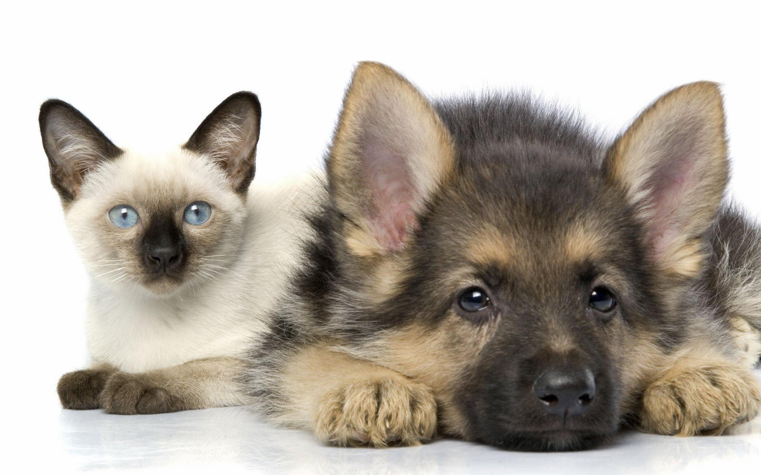 Кошка и собака, фото