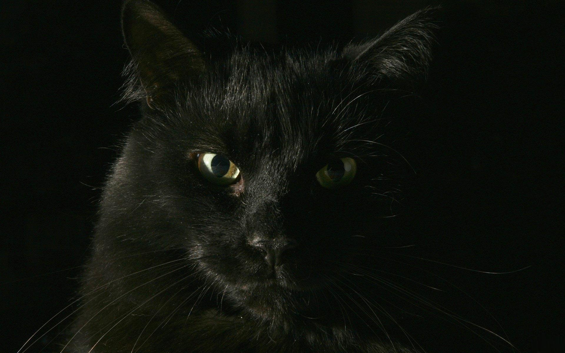 черный кот, обои, фото