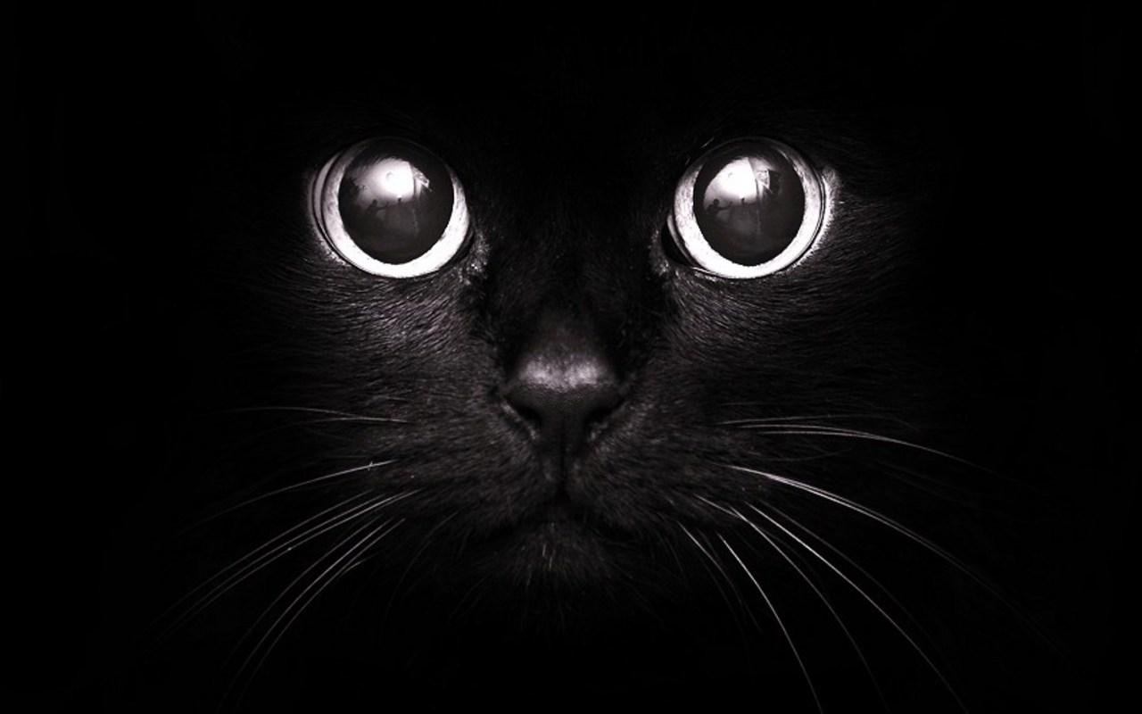 Черный кот, светящиеся глаза, кошки, фотообои на рабочий стол