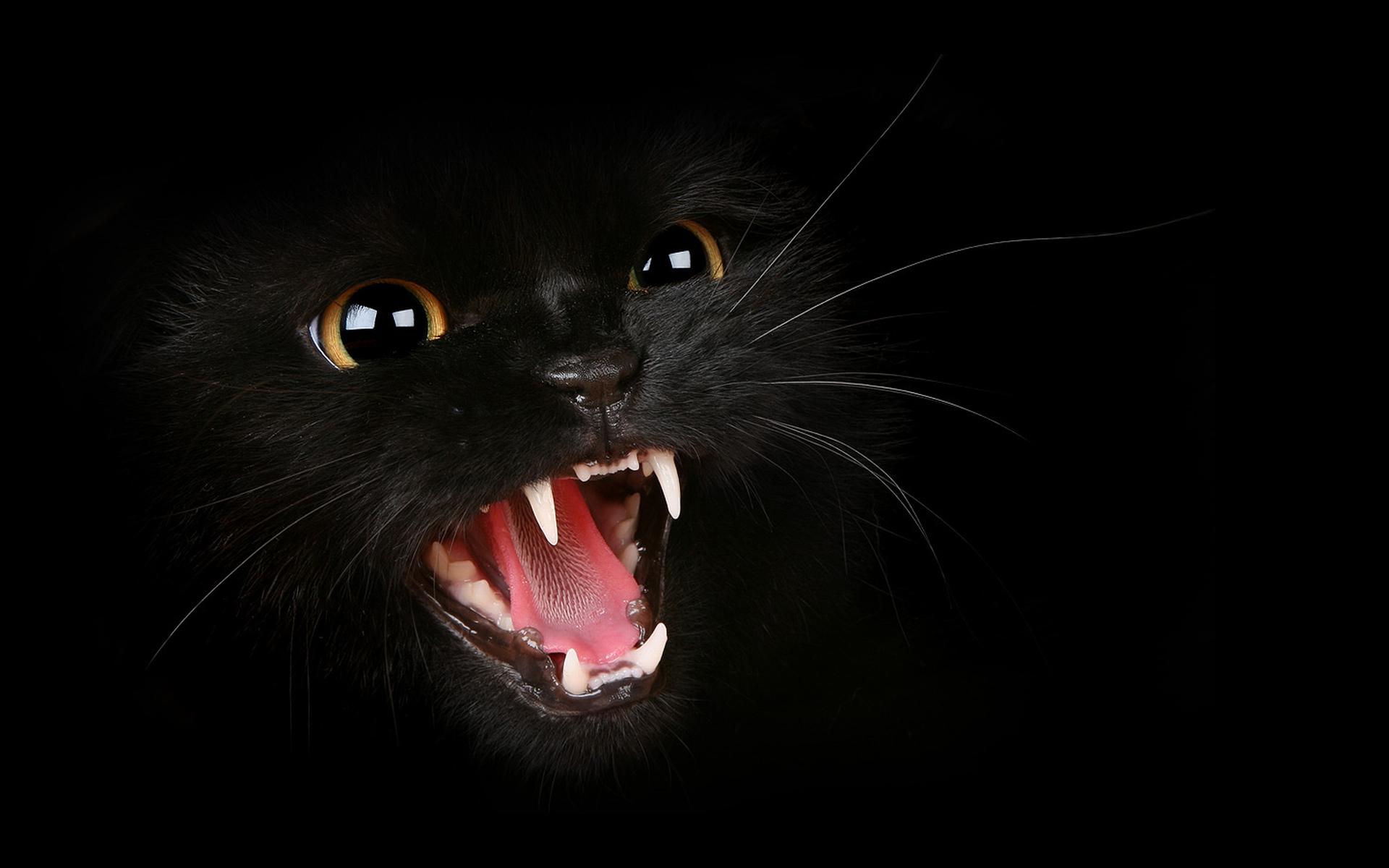 Кошка черная, оскал, зубы, фото обои