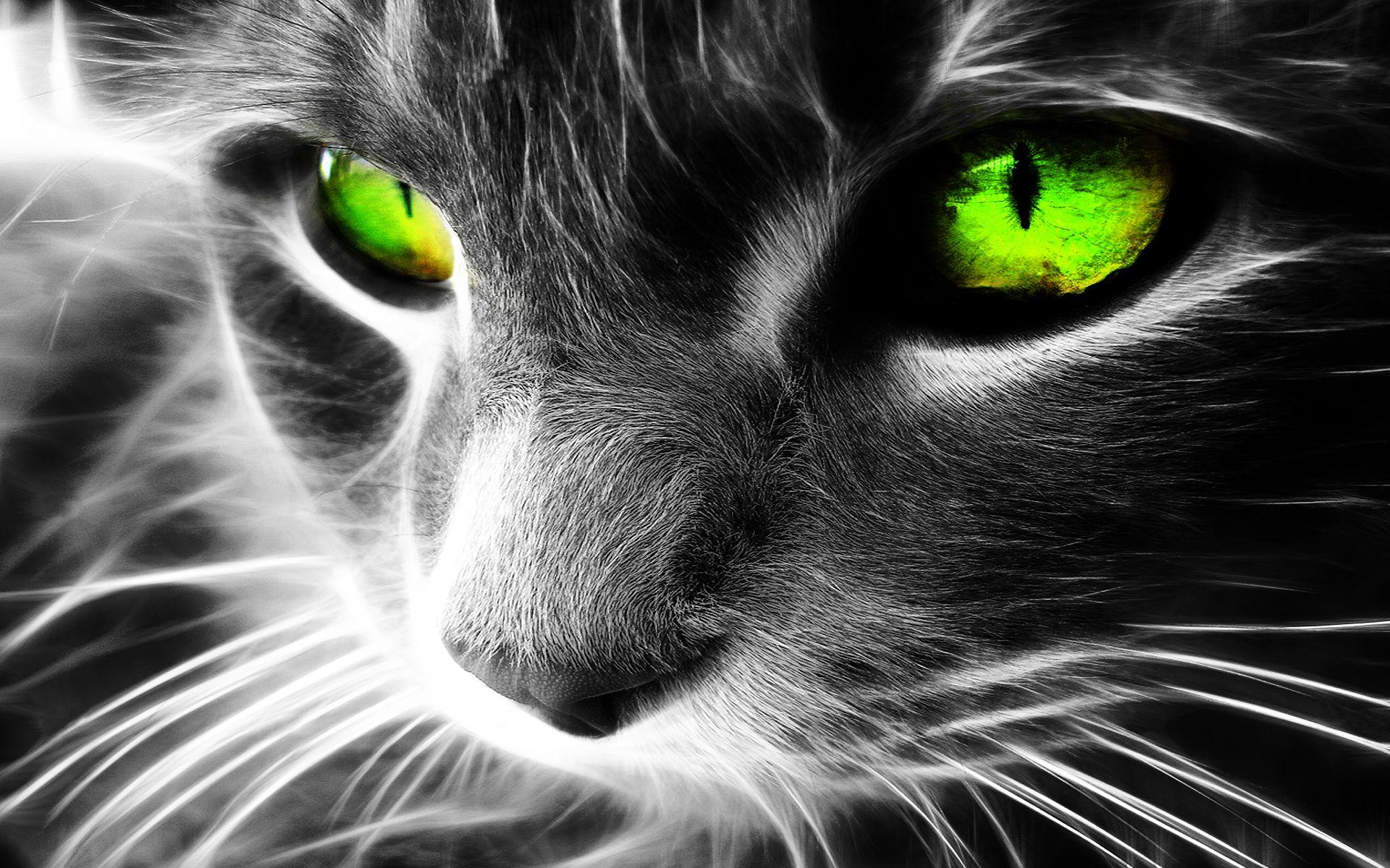 Кошка с зелеными изумрудными глазами, фото бои