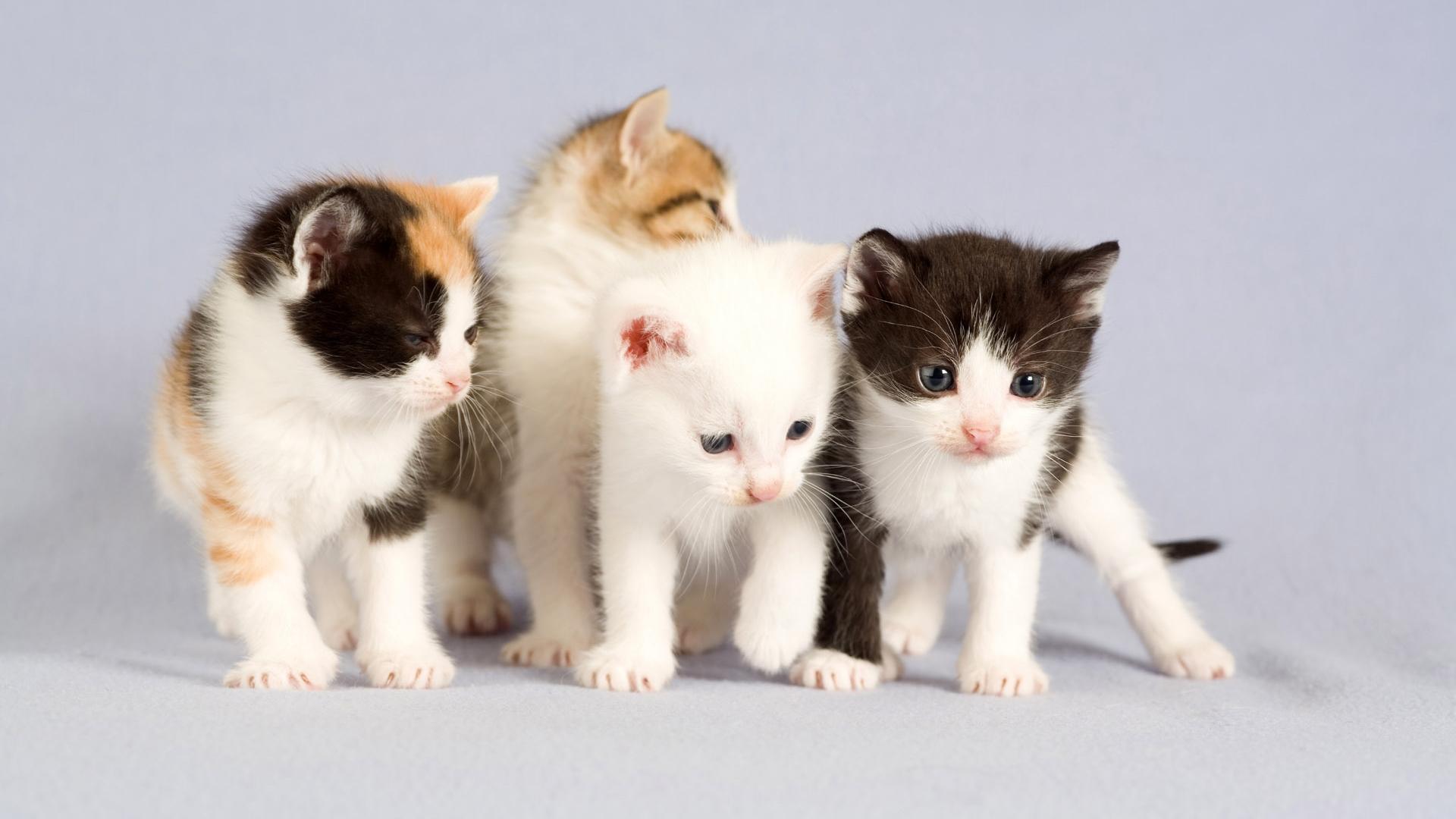 котята, фото, обои
