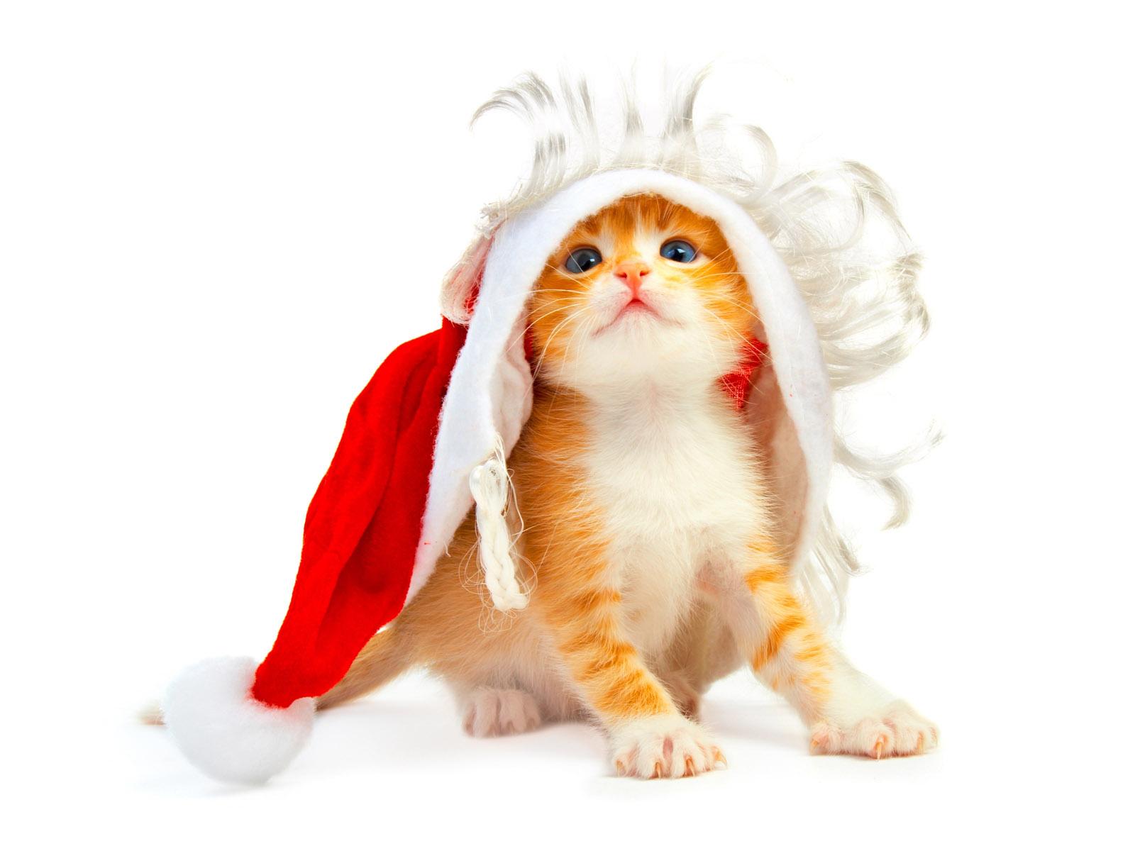 рыжий котенок на новый год, фото, обои