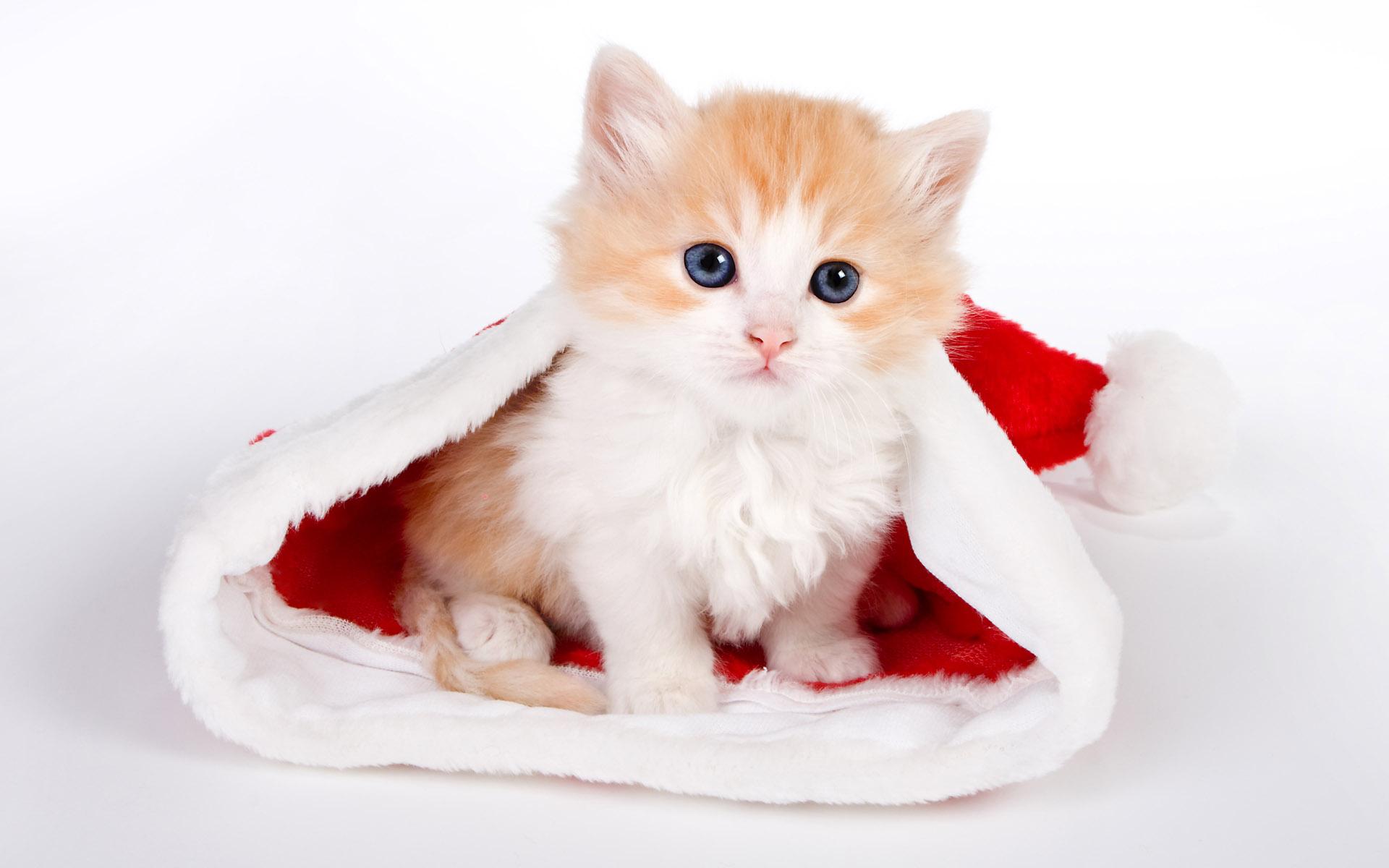 маленький рыжий котенок, фото обои