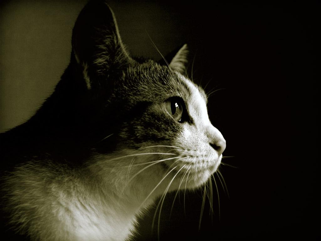 кошка, фото, обои