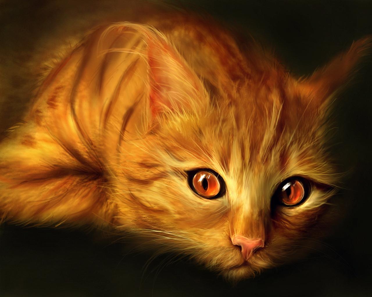рыжий кот с красными глазами, кошки, фото