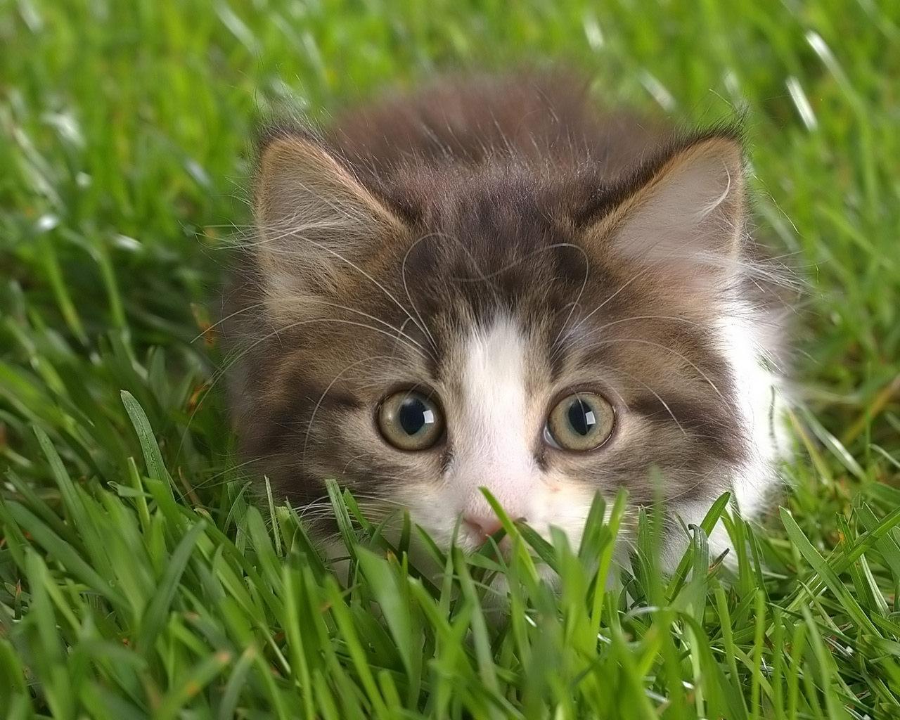 котенок в траве, обои фото