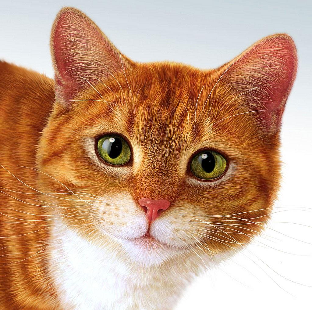 рыжий кот, кошка, фото, обои