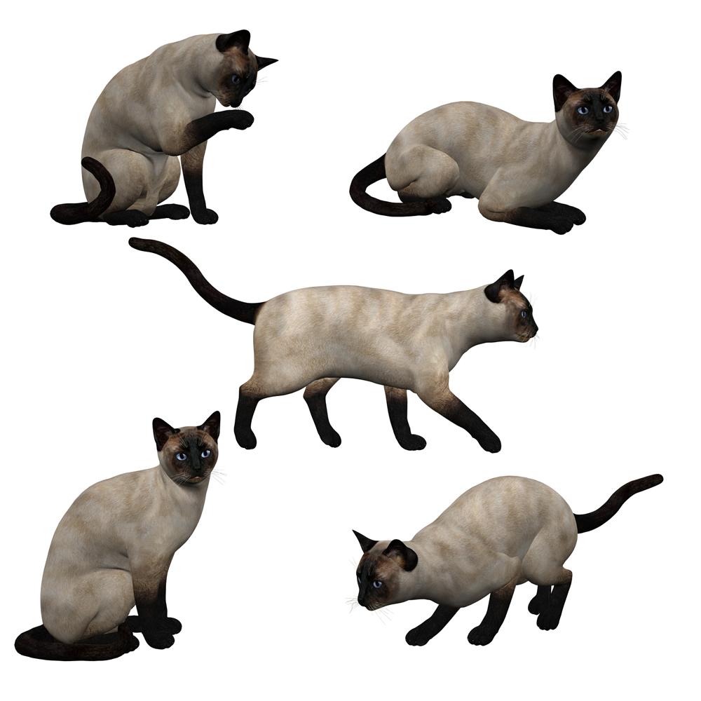 кошки, гелерея, кошка, фото, для дизайна