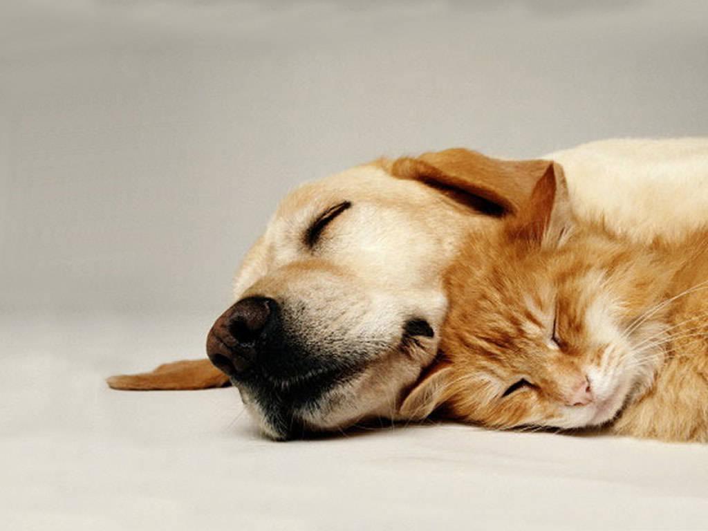 котенок и собака, фото, обои