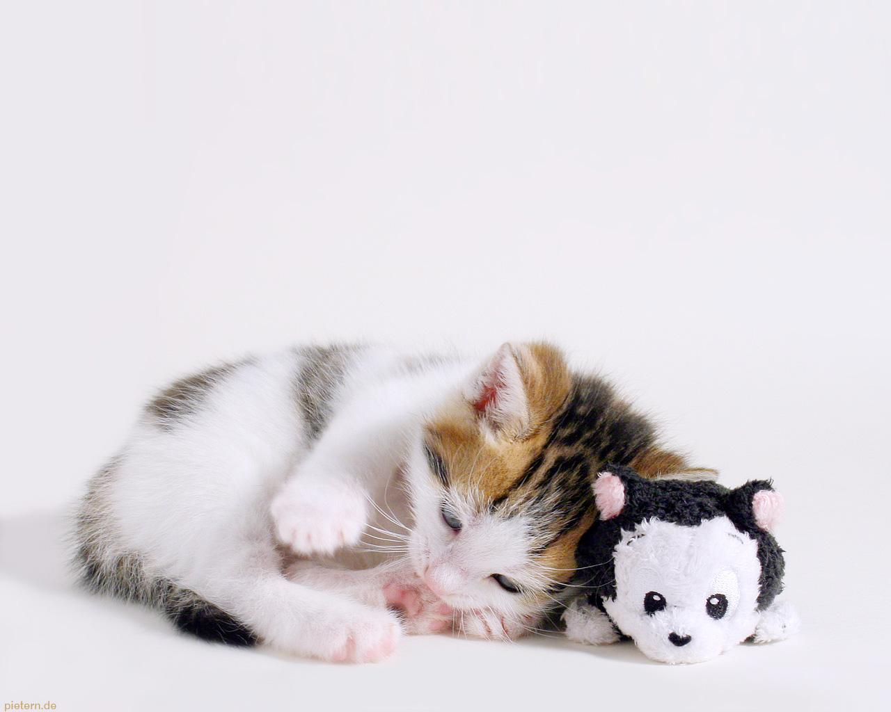 котенок и игрушка, фото, обои