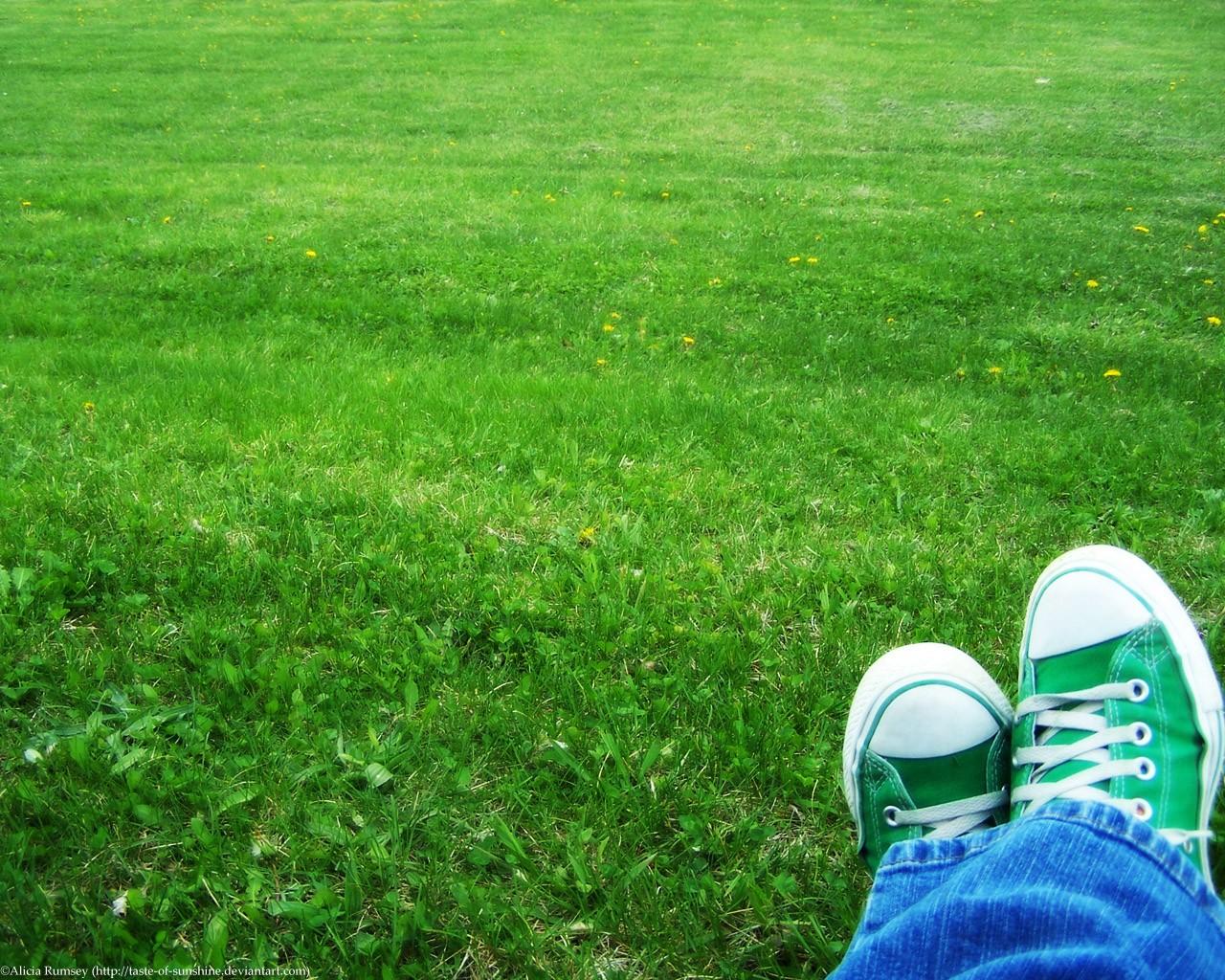 Обои для рабочего стола, кеды, зеленая трава, луг