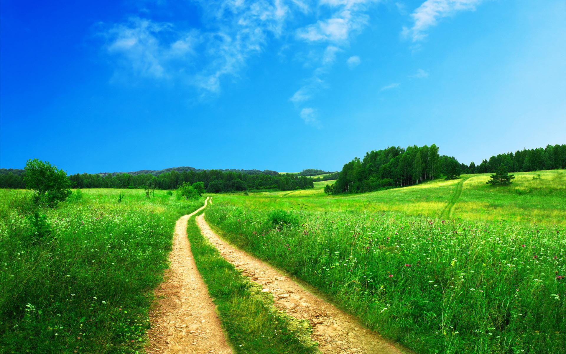 Дорога, трава зеленая, высокая обои на рабочий стол, красивое фото