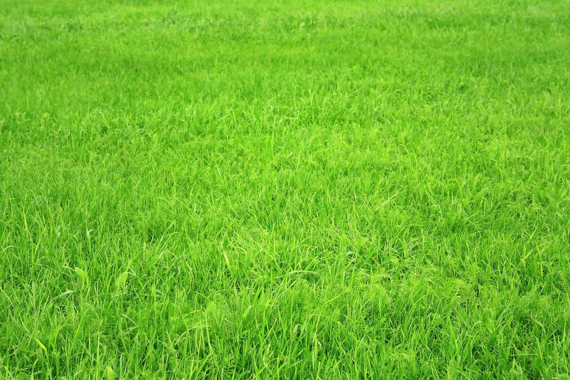 Зеленая трава, текстура  травы, обои на рабочий стол
