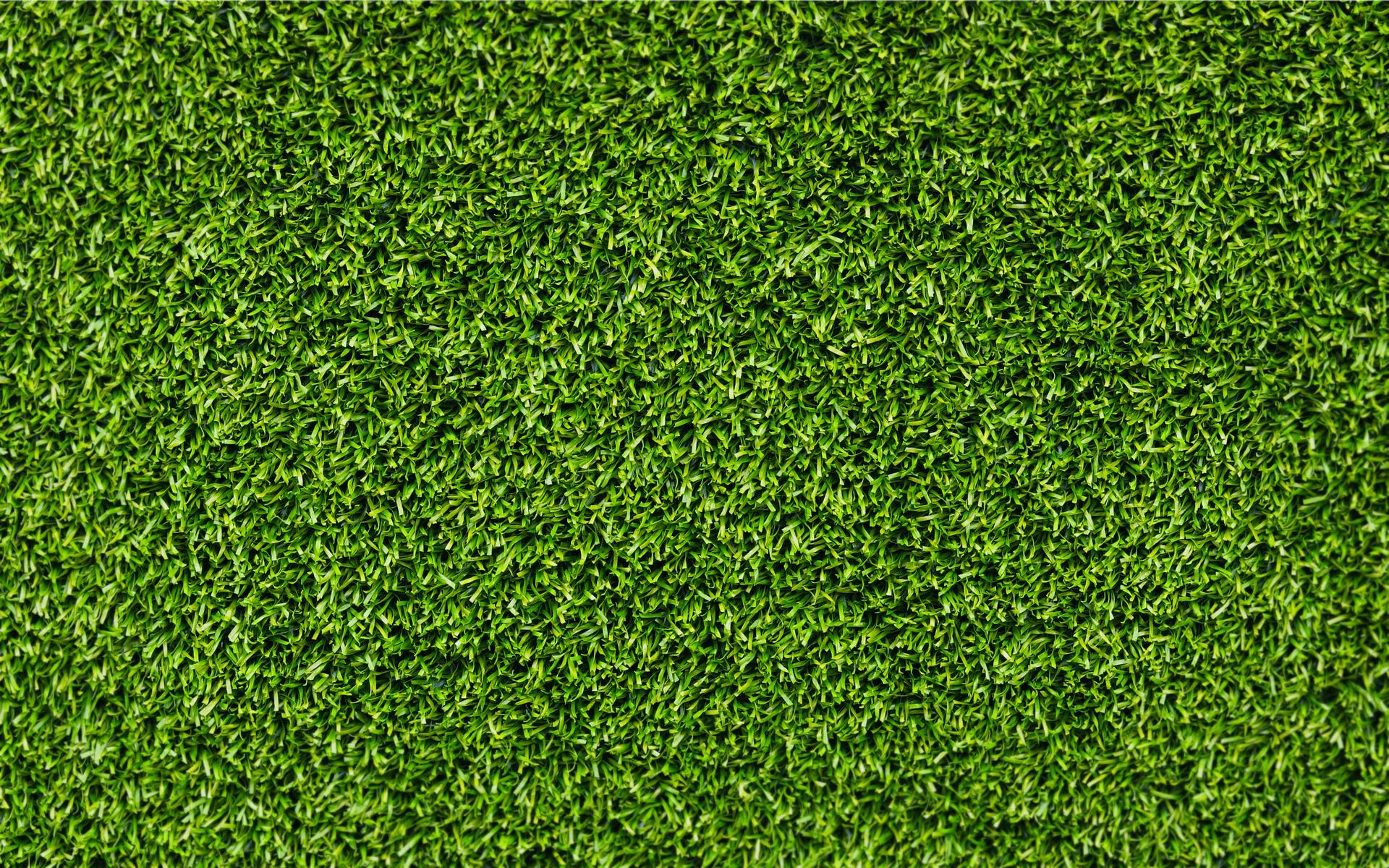 фон трава зеленая, текстура, обои на рабочий стол, фото для дизайна