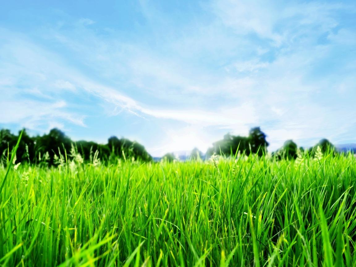 Обои, луг, фото, зеленая трава, газон, фото для рабочего стола