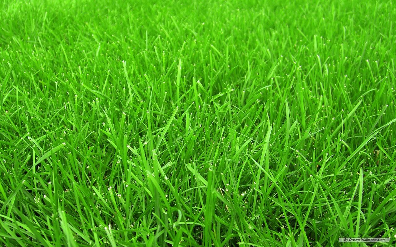 Зеленая трава, скачать фото, обои для рабочего стола, газон, текстура