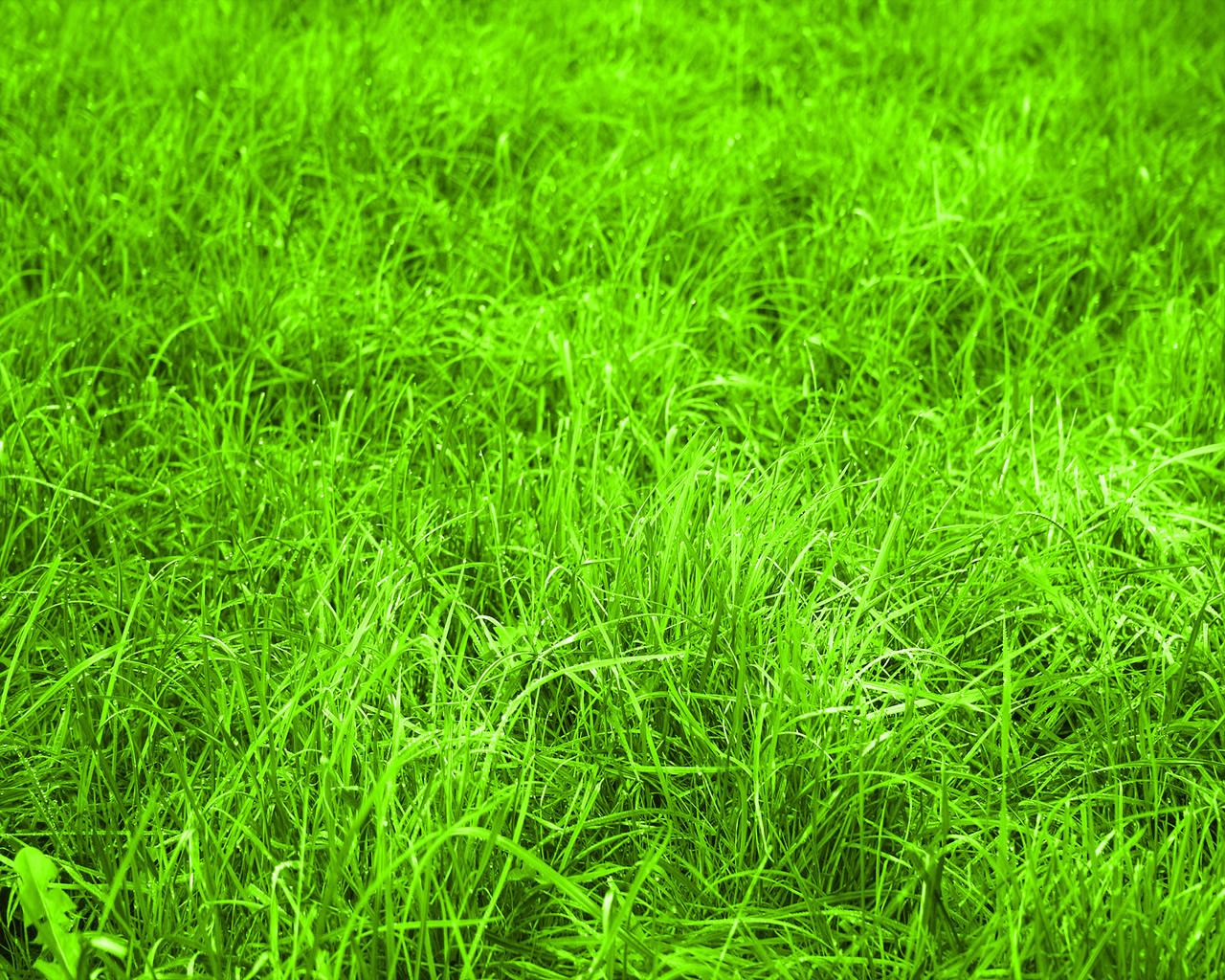 Трава зеленая, газон, обои для рабочего стола, текстура для дизайна