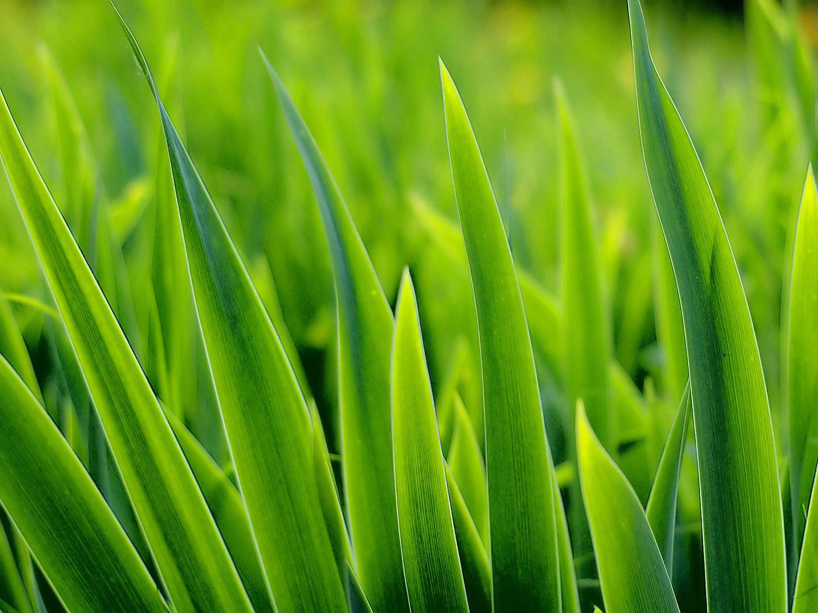Обои для рабочего стола, трава, зеленая травка, grass