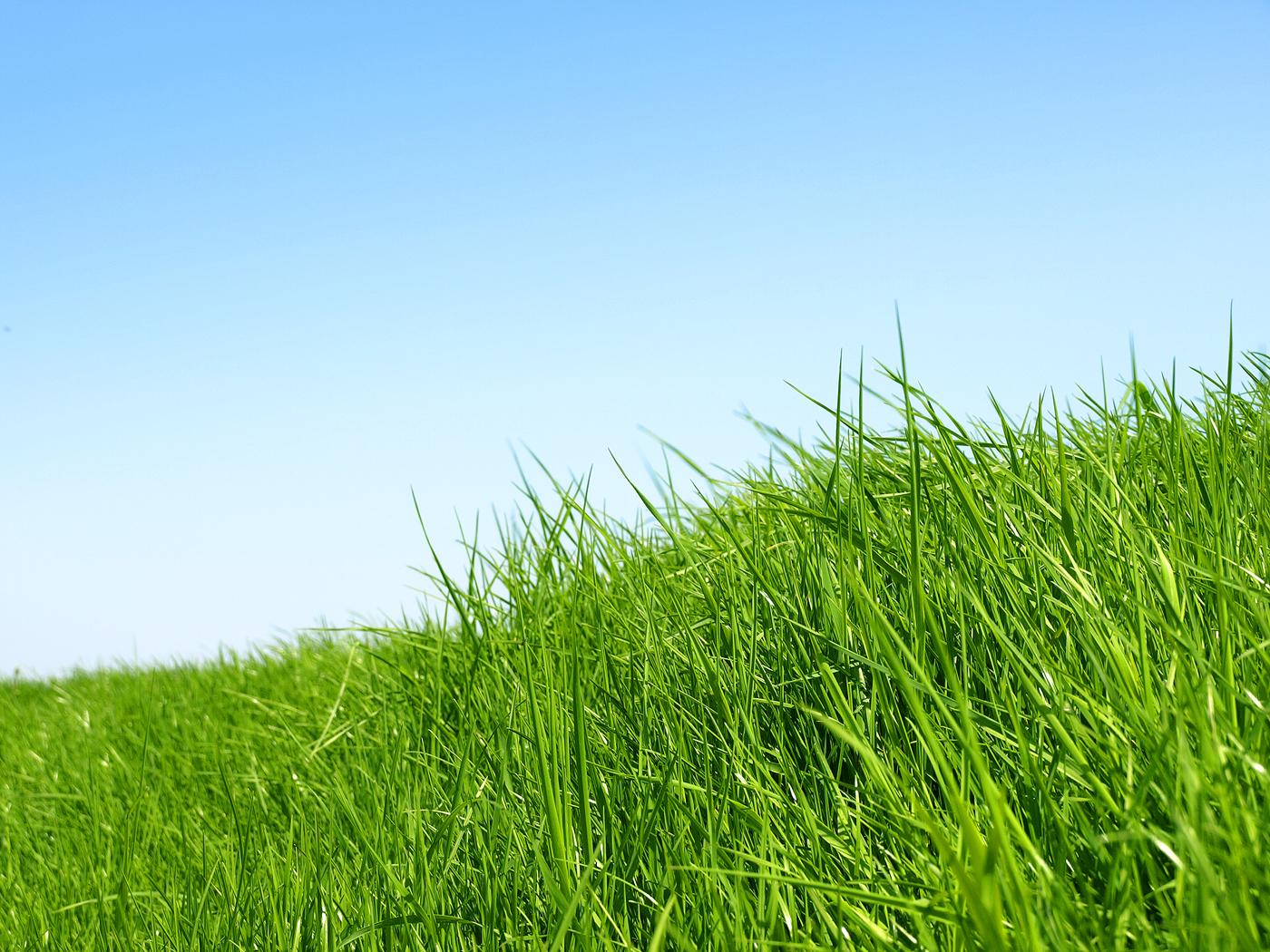 зеленая трава и небо, обои для рабочего стола