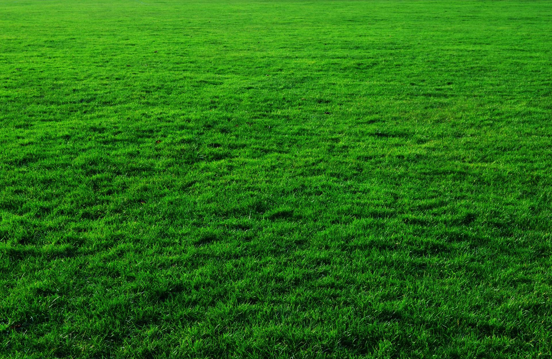 газон зеленый, зеленая трава скачать обои для рабочего стола, grass
