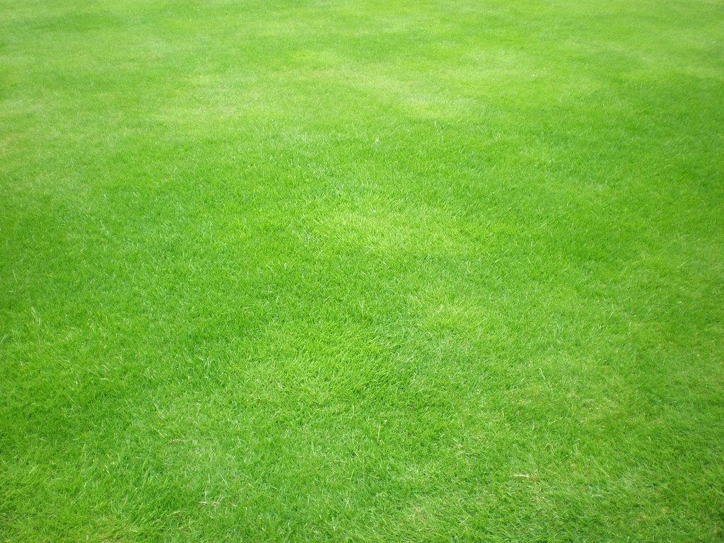 Текстура, фото зеленой травы, обои