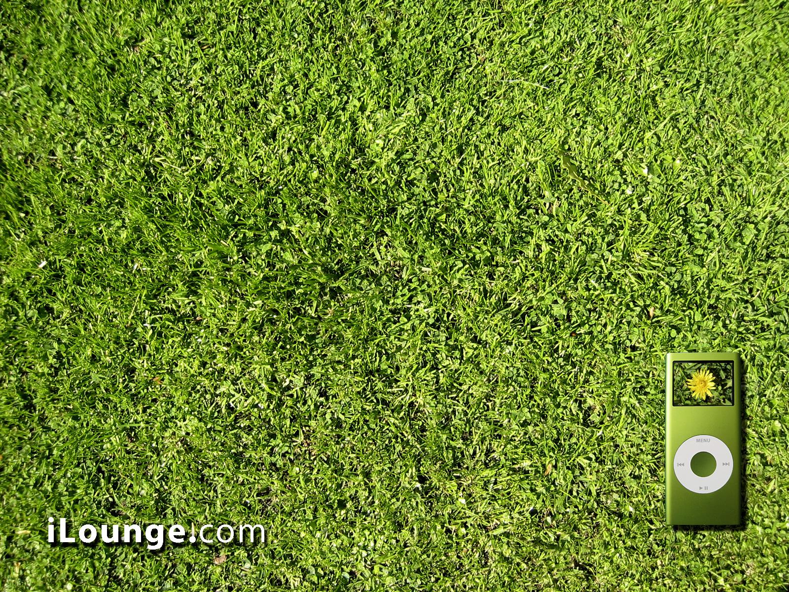 ipod на траве, обои на рабочий стол, зеленая трава, фото