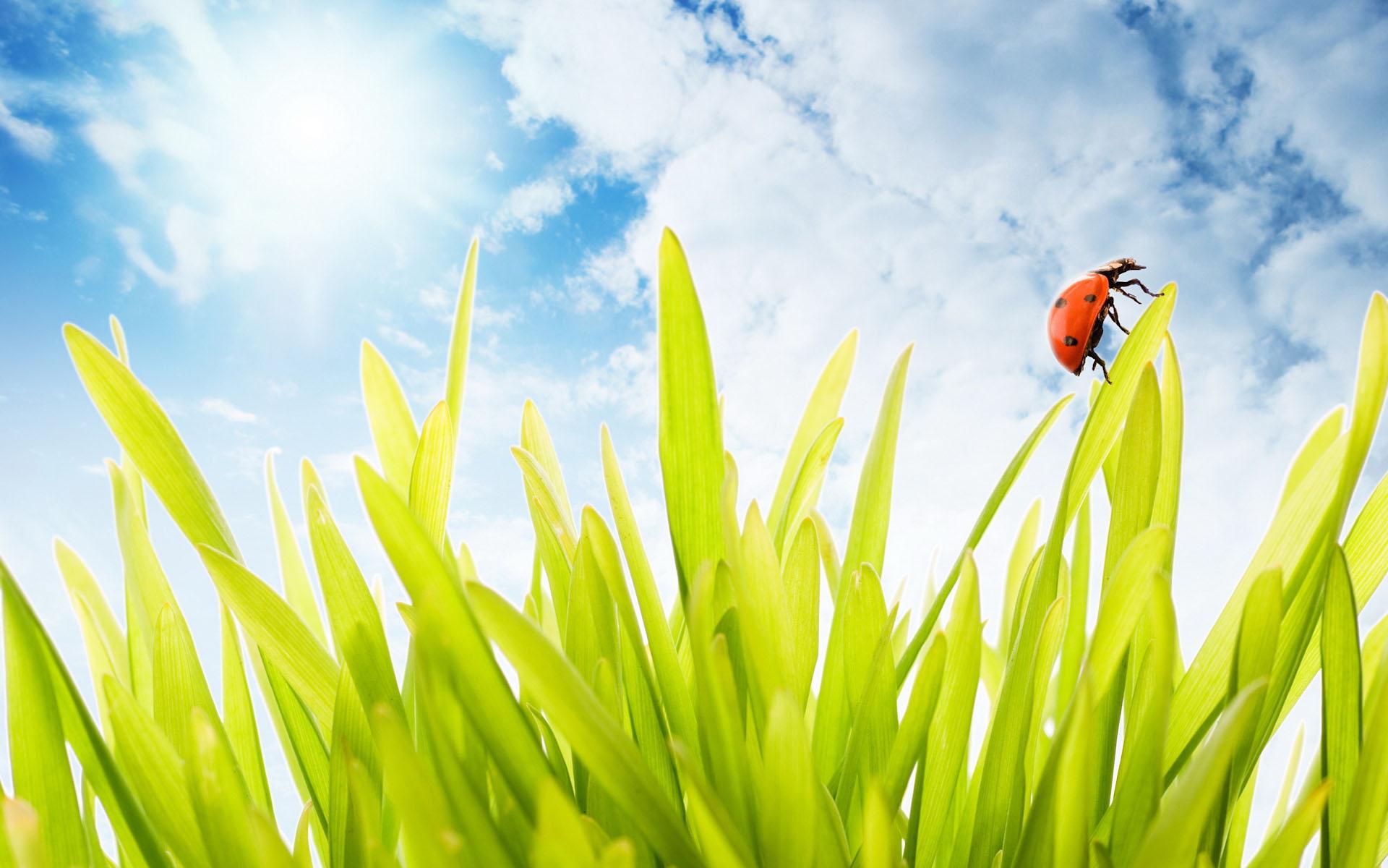 Трава зеленая и небо, обои на рабочий стол