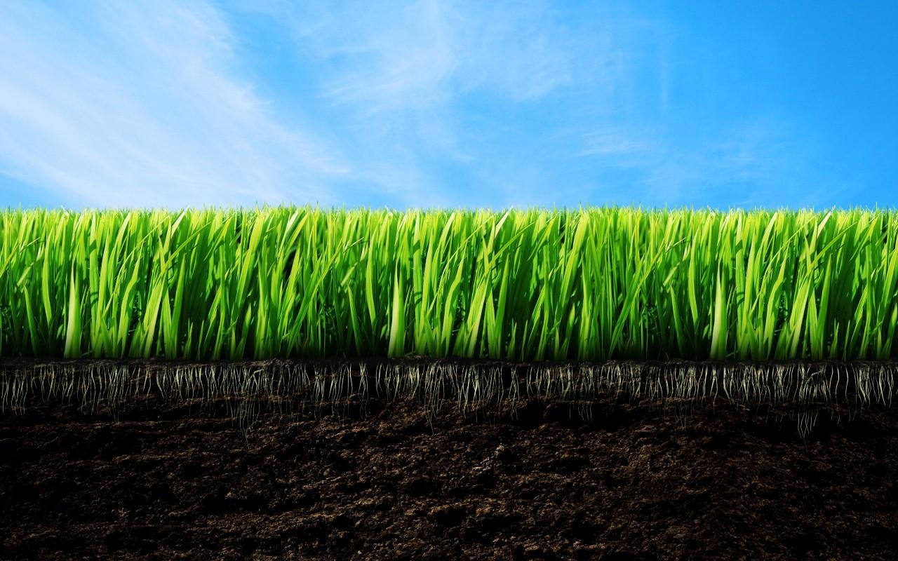 Зеленая трава, газон, фото, обои