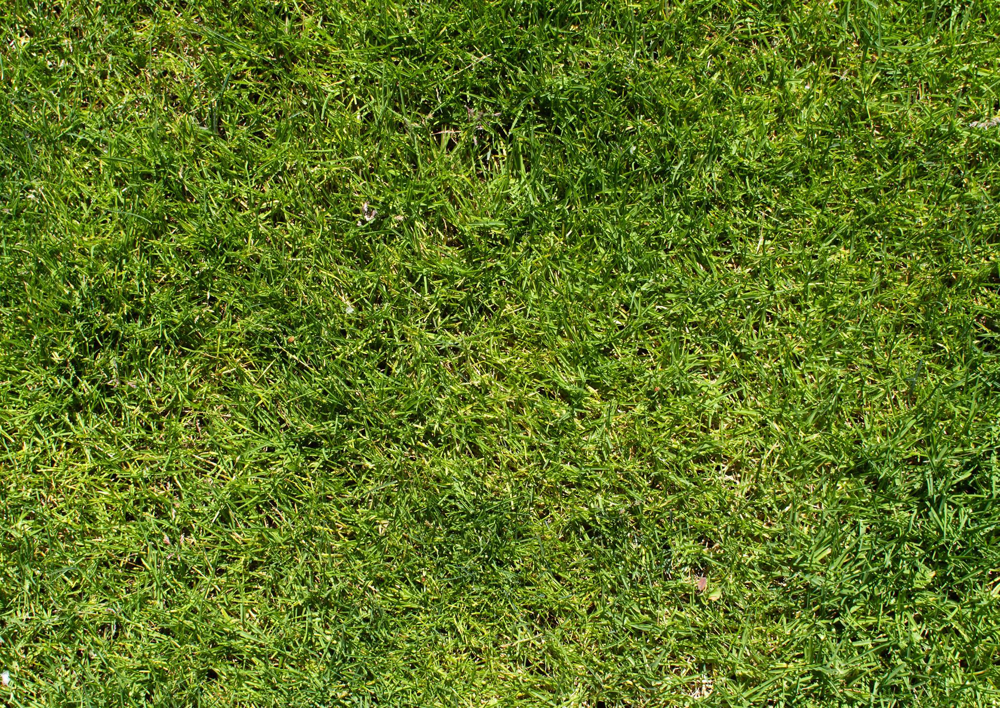 Текстура зеленой травы, фото, обои
