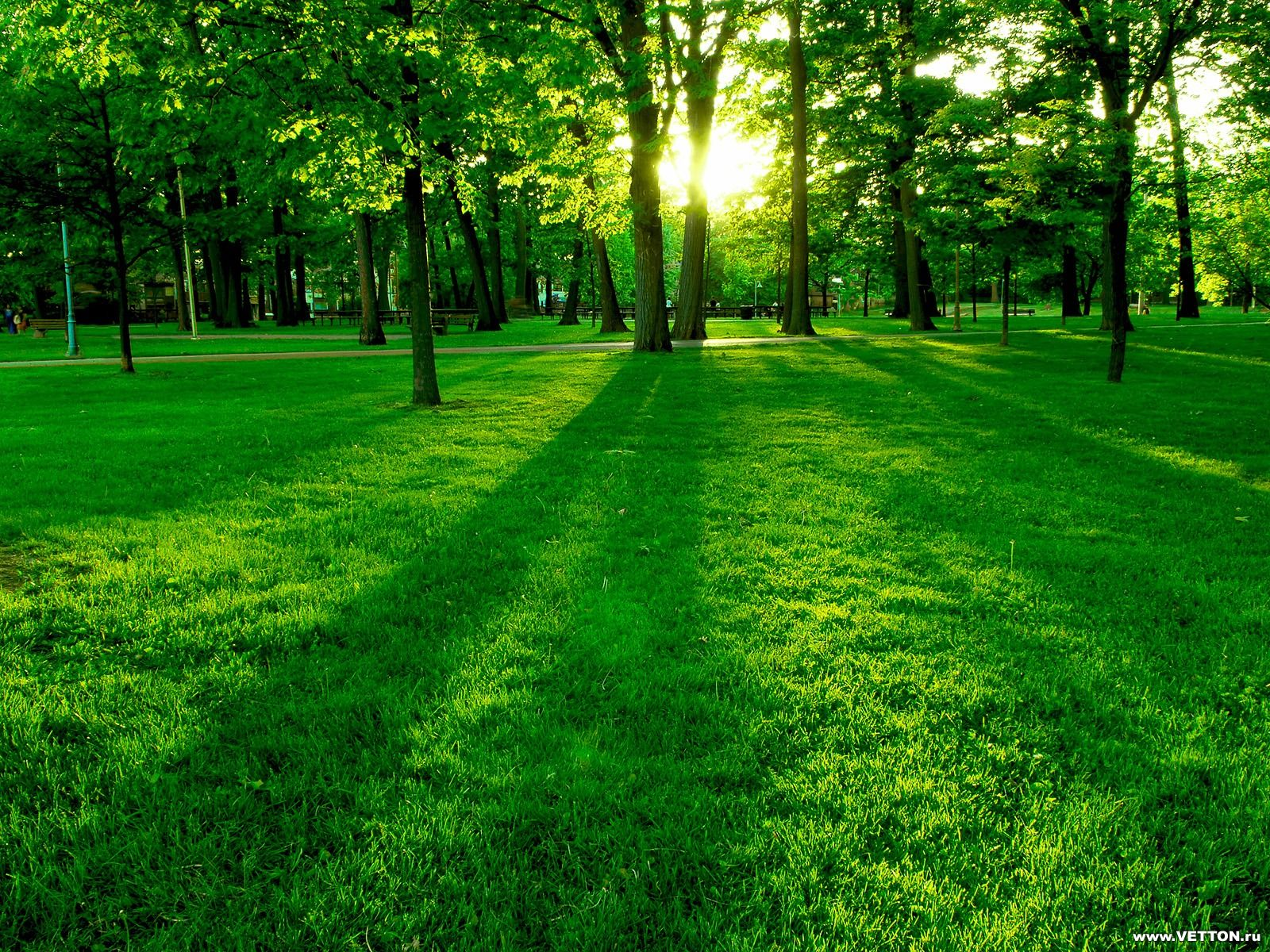 обои для рабочего стола, лес, зеленая трава, луг, красивое фото