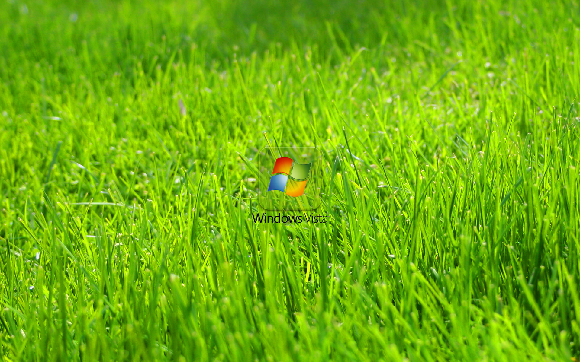 Обои для рабочего стола, windows, зеленая трава