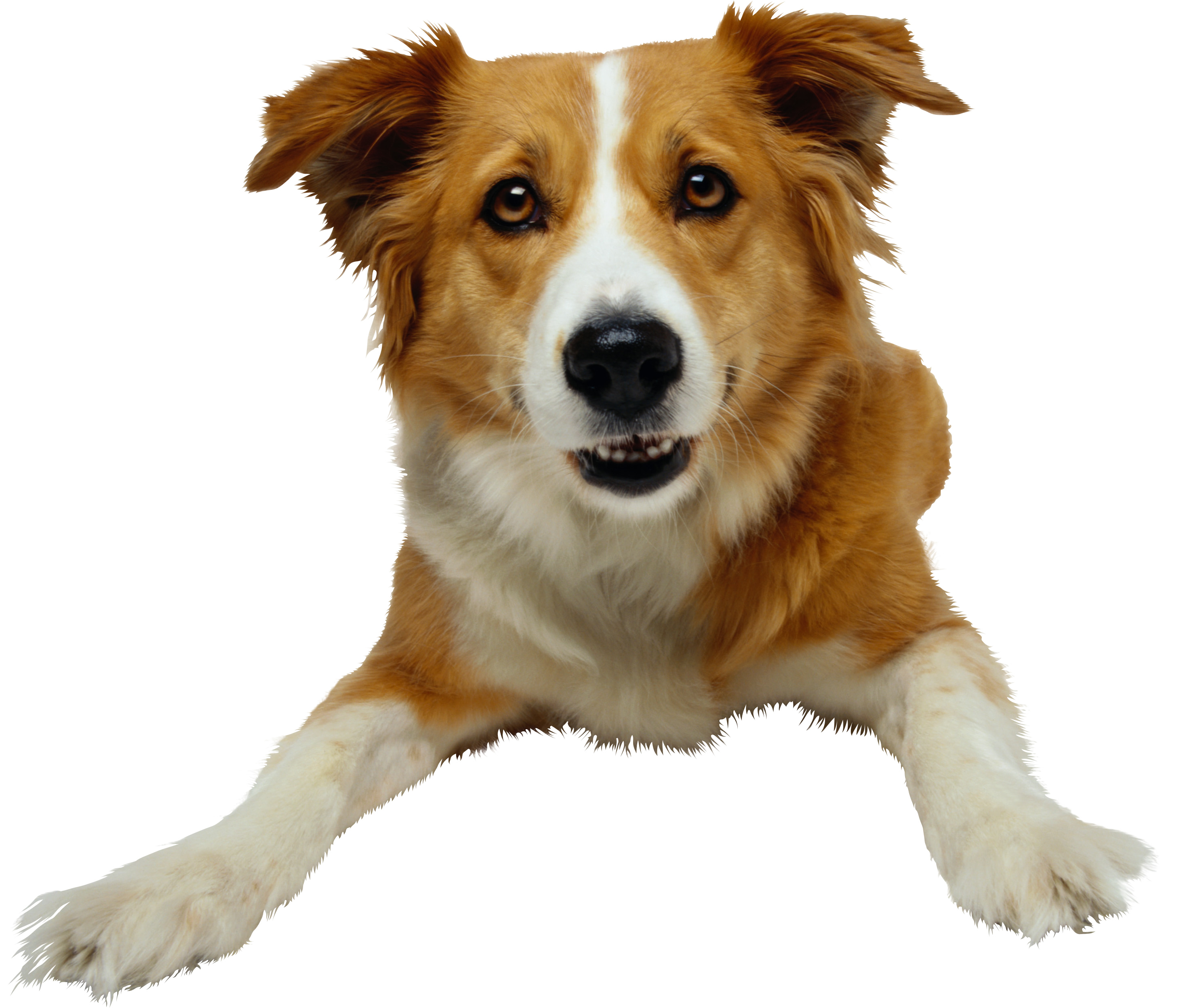 Собака, фото, обои для рабочего стола