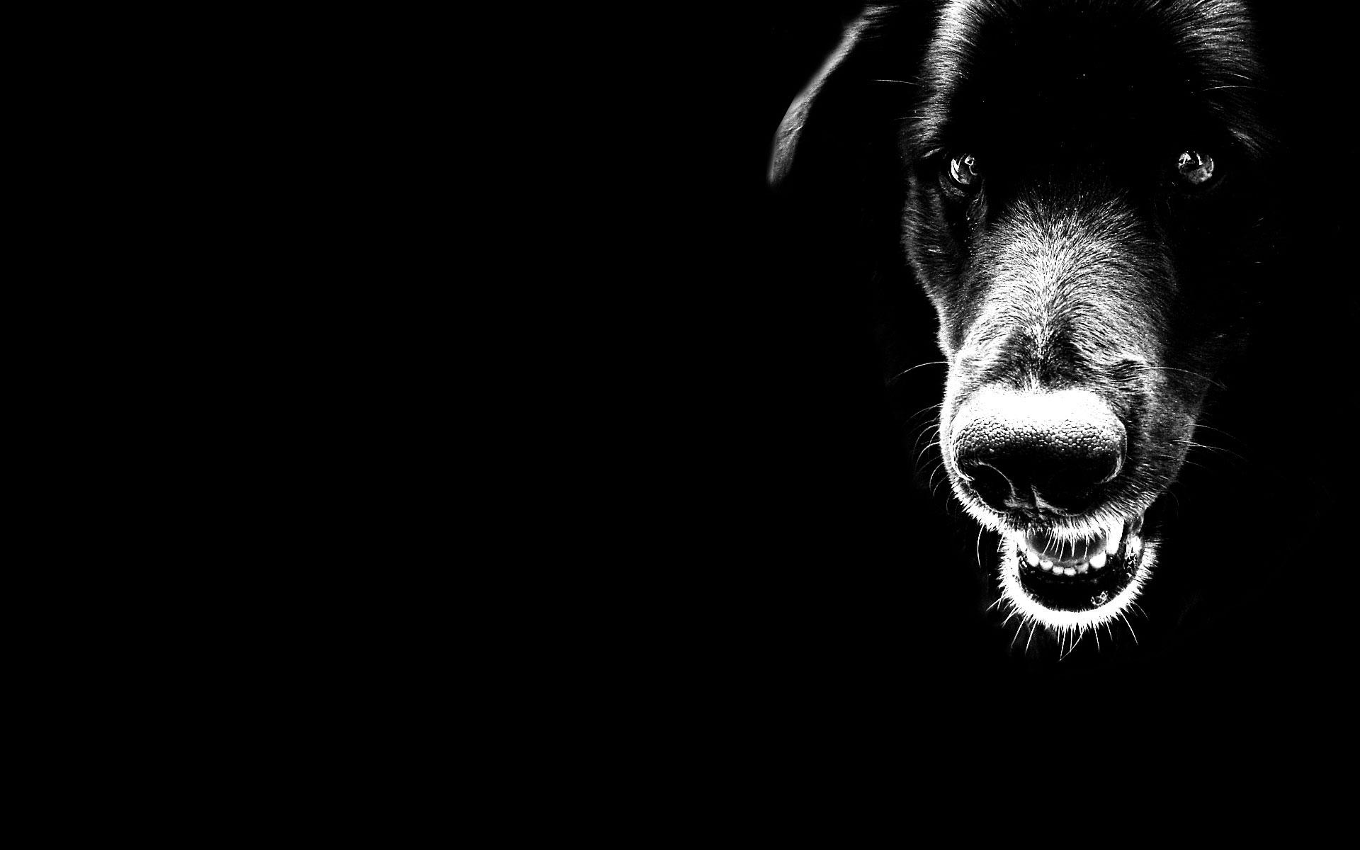 Фото, обои для рабочего стола, собака, dog