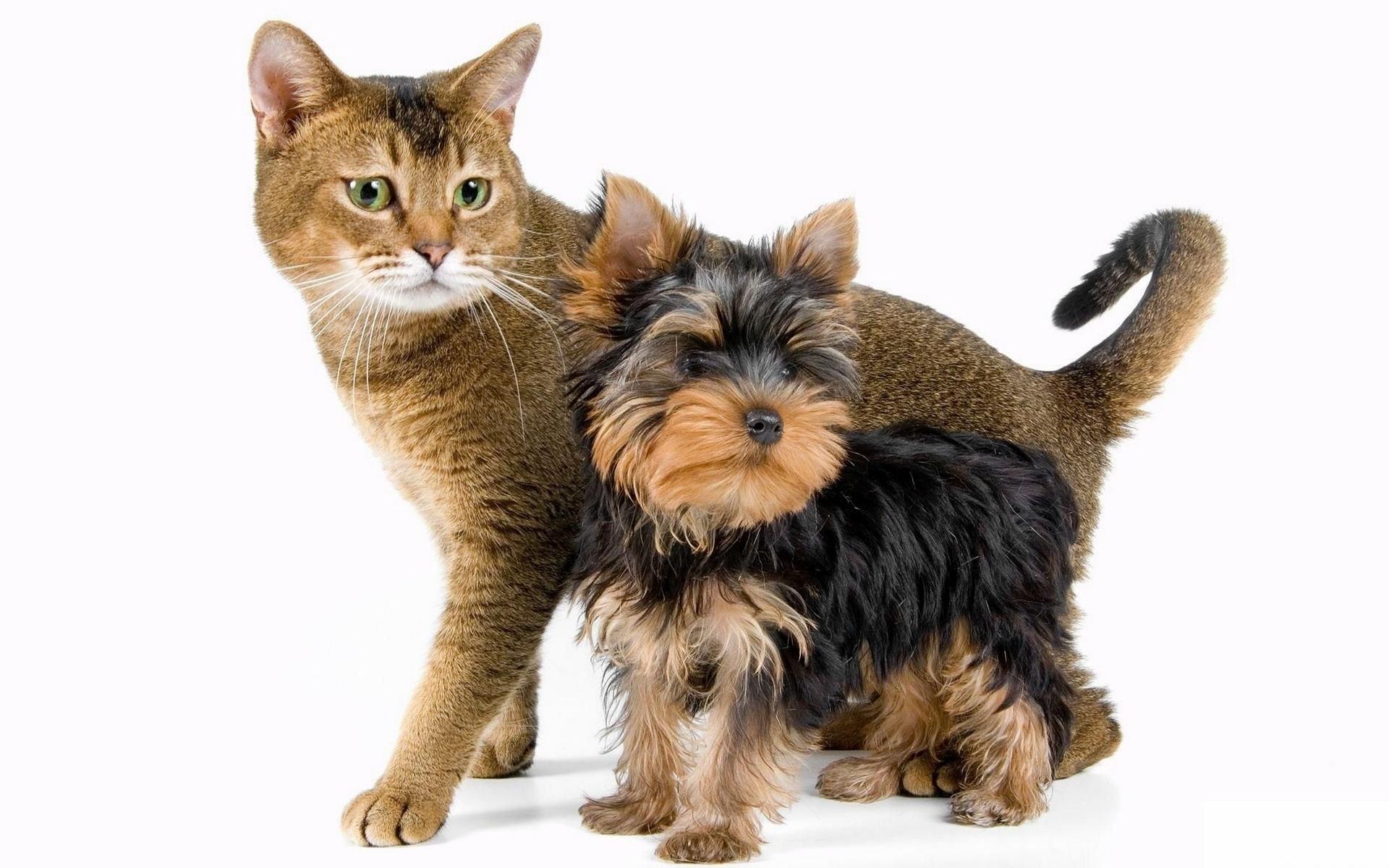 кот и щенок, фото обои для рабочего стола