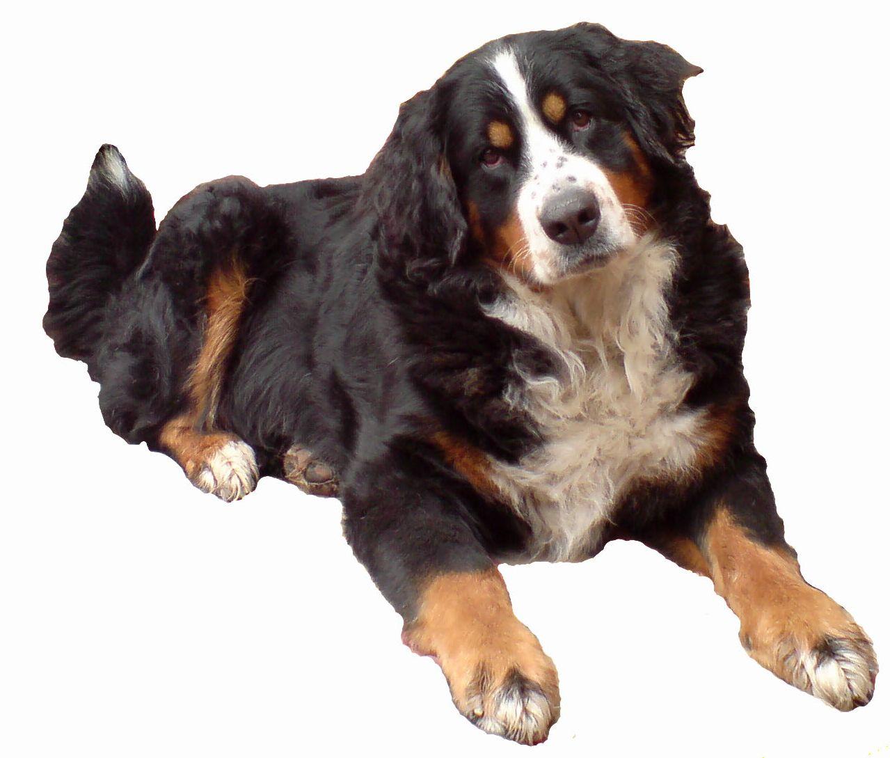 Собака, обои для рабочего стола, собака