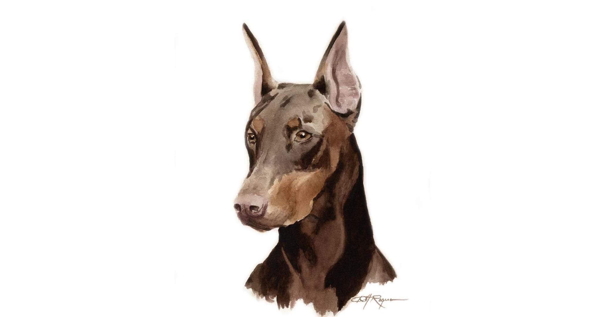 Доберман, рисунок , фото обои, собаки