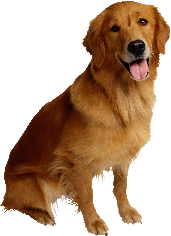 Собачка, собаки, фото, обои