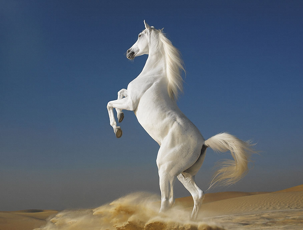 конь на дыбы, лошадь, фото, обои для рабочего стола