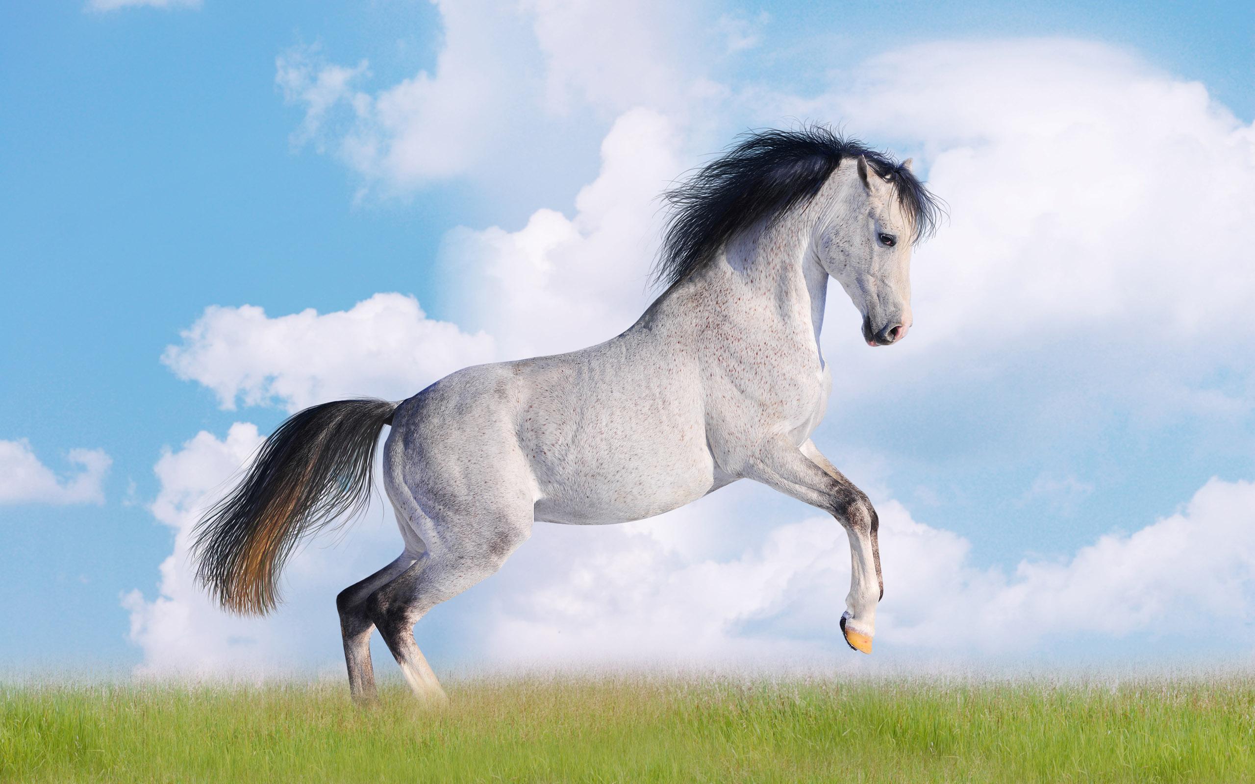 Серый конь на траве, фото, обои на рабочий стол, лошадь