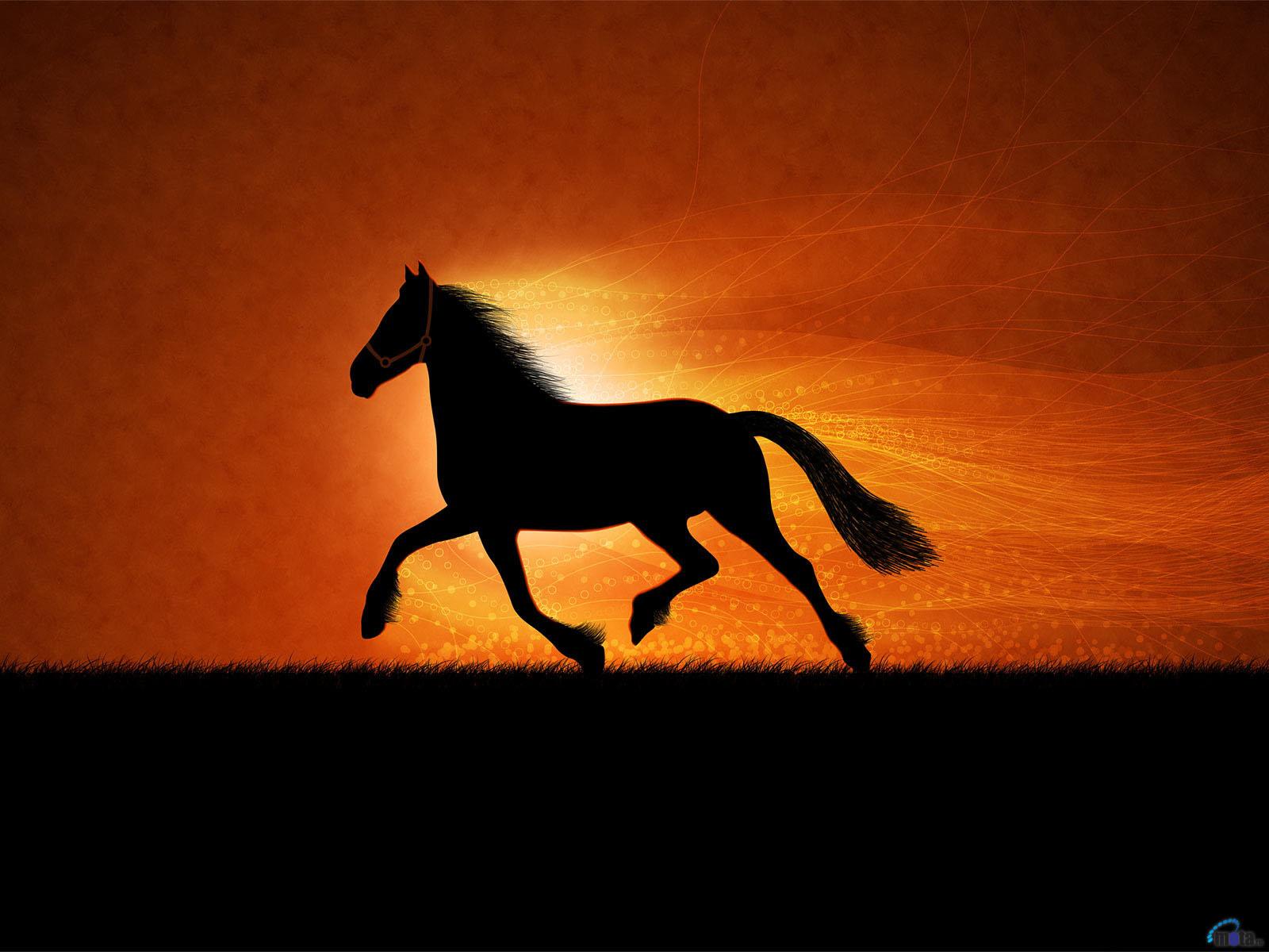 Закат лошадь, конь, фото обои на рабочий стол