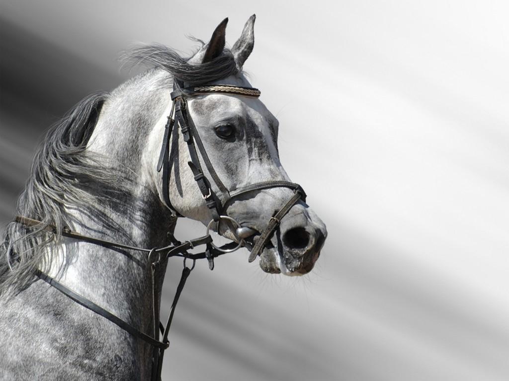 Конь, голова лошади, фото лошадей, обои на рабочий стол