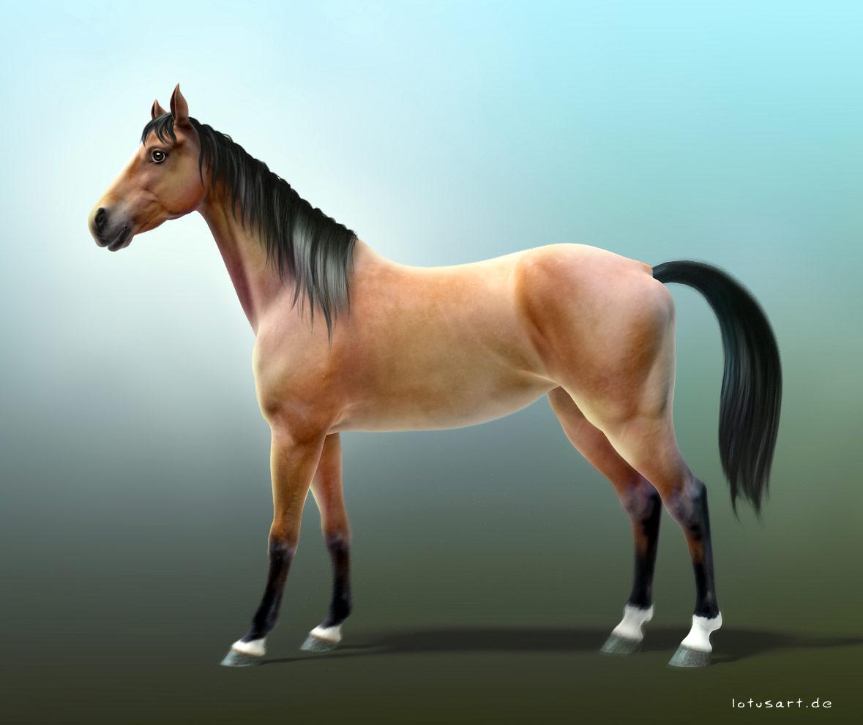 Конь, фото, обои на рабочий стол, лошадь