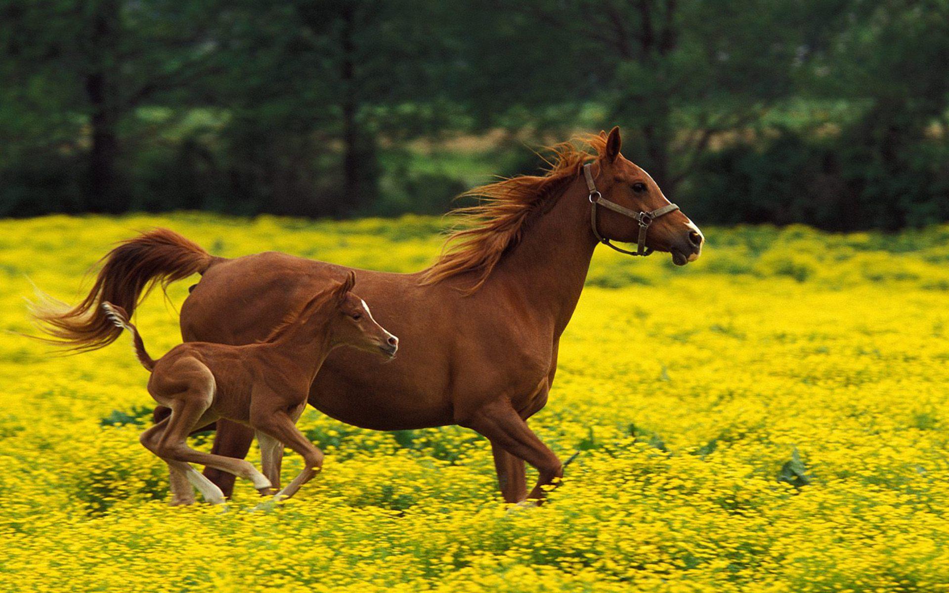 Злой конь, рисунок, клипарт, фото